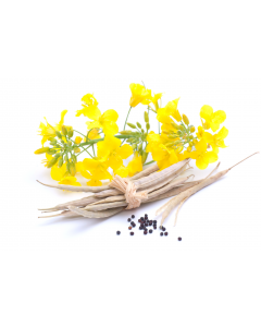 Canola Oil - Organic