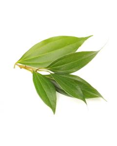 Cinnamon Leaf Oil - Organic