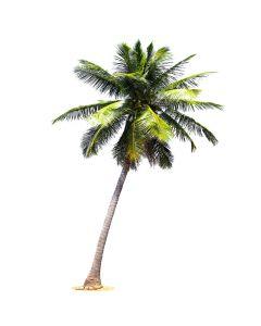 Coconut Syrup - Organic
