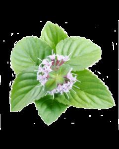Menthol Crystals - Organic