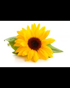 Sunflower Lecithin - Powder Organic