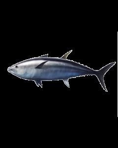 Tuna Oil - 5% EPA & 25% DHA RBD - Pail (18 kg)