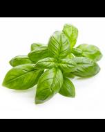 Basil Oil - Organic