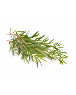 Tea Tree Oil - Australian