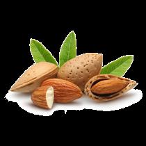 Almond Oil - Sweet Refined Organic Kosher