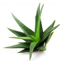 Aloe Vera Powder - Organic