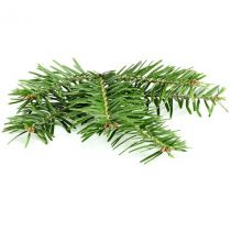 Fir Needle Oil - Siberian