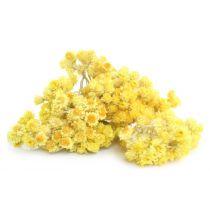 Helichrysum Italicum Oil - Organic