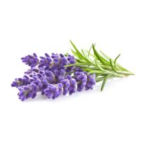 Lavender Oil - Organic - 3.36 kg Gallon (128 fl. oz.)