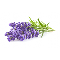 16 fl. oz. Lavender Oil - Organic