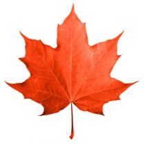 Maple Syrup - Organic (32 fl. oz.)