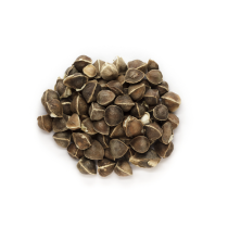 Moringa Oil - Refined Organic