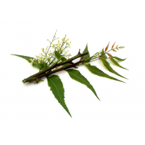Neem Oil - Virgin Organic