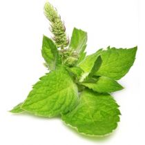 Peppermint Oil - Organic (Arvensis)
