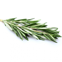 Rosemary Oil - Organic