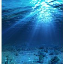 Shark Liver Oil - 24% Alkoxyglycerol
