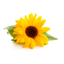 Sunflower Lecithin - Liquid Non-GMO