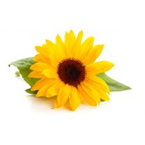 Sunflower Lecithin - Liquid Non-GMO