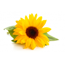 Sunflower Lecithin - Liquid Organic