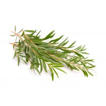 Tea Tree Oil - Organic