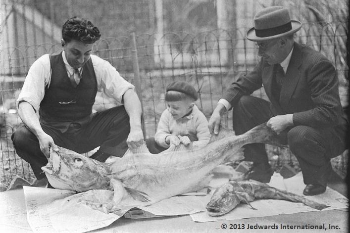 Cod Liver Oil Processing in South Boston, Massachusetts (1940)